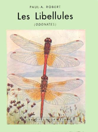 libellule4