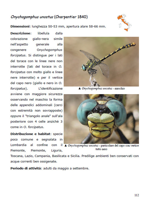 anteprima01